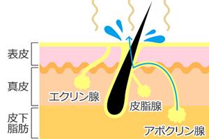 黄ばみとわきがの原因は同じ種類の汗にある